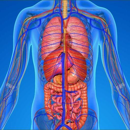 Innere Anatomie Testfragen