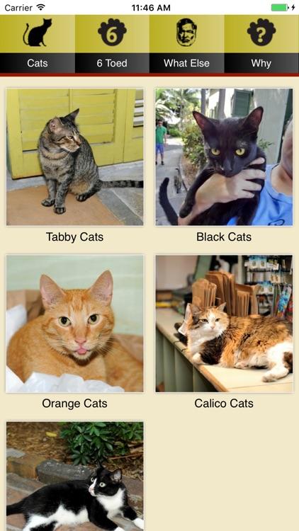 Hemingway Cats