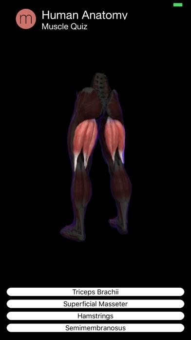 Muscle Quiz Screenshot 8