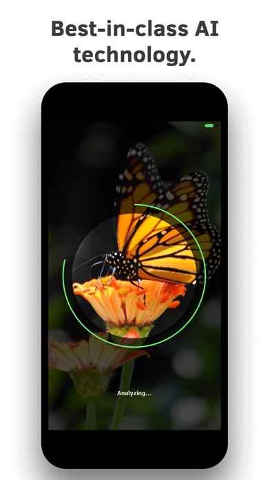 Insect Identification screenshot 4