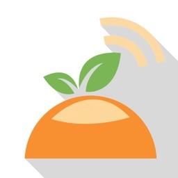 橙子网-官方客户端