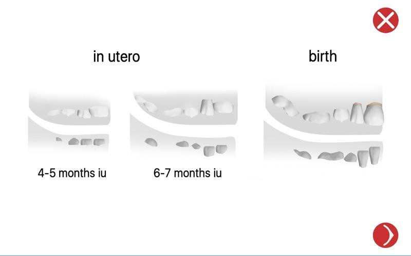 Dental Corpus Primary Lite скриншот программы 2