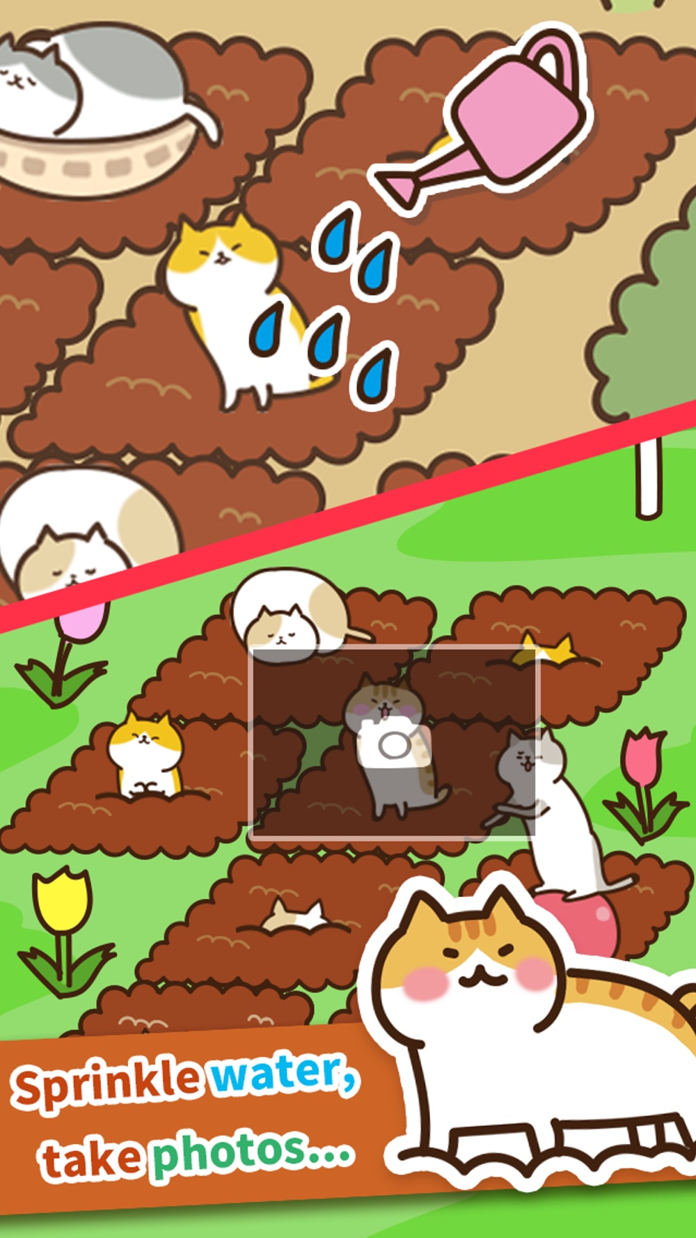 Field of Cats hack tool