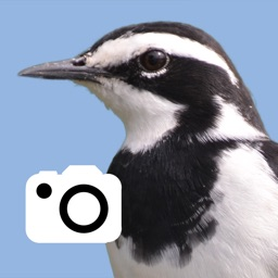 My Bird Album