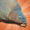 Dangerous Derk Interactive - Carp Fishing Simulator artwork