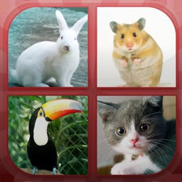 Animals Quiz - Guess Animals!