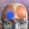 3D人体解剖学 チームラボボディ2021