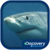 Ruckus Media Group - Discovery #MindBlown: Sharks  artwork