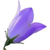High Country Apps, LLC - Idaho Wildflowers artwork