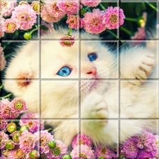 Activities of Tile Puzzle Cats
