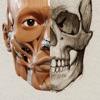 アーティストのための3D解剖学的構造   バージョン 2