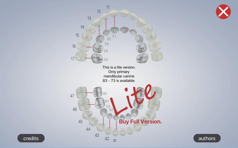 Dental Corpus Primary Lite скриншот программы 1