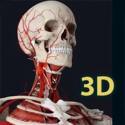 Human Anatomy 3D