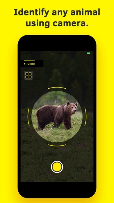 Animal Identifier. screenshot 1