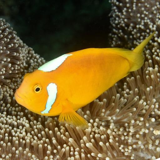 Solomon Islands Fish ID