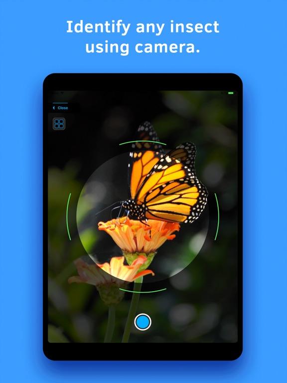 Insect Identification screenshot 6