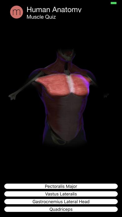 Muscle Quiz Screenshot 3