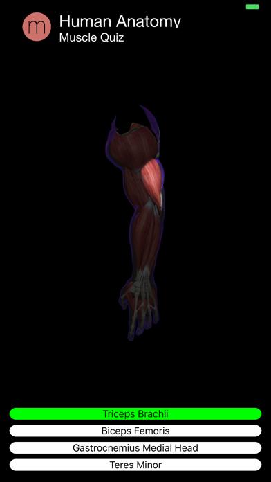 Muscle Quiz Screenshot 6