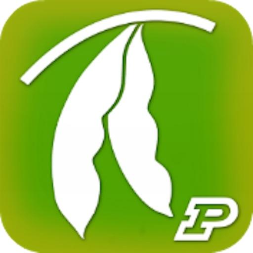 Purdue Extension Soybean Field Scout
