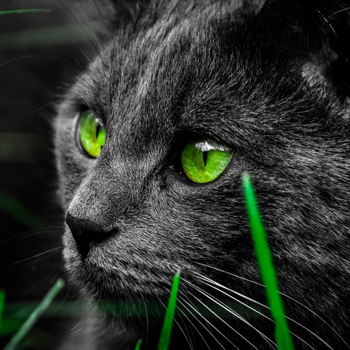 Cute Cat Wallpapers Backgrounds And Pictures By Taras Bekhta