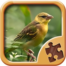 Birds Jigsaw Puzzles - Amazing Logical Game