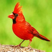 Birds Encyclopedia app review