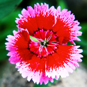 Garden Plants Bible app review