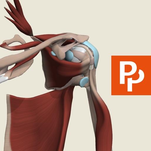 Shoulder: 3D Real-time Human Anatomy