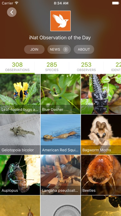 iNaturalist screenshot-2