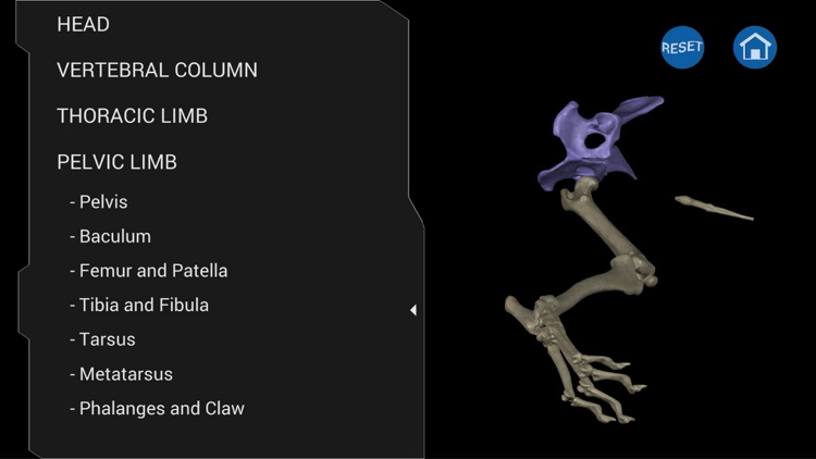 Osteology in Dogs screenshot-4