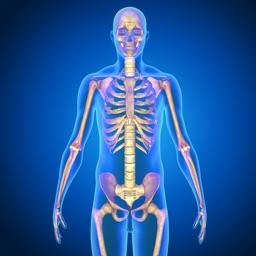 Human Skeletal System Quiz