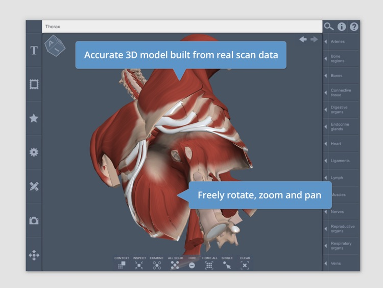 Thorax: 3D Real-time Human Anatomy