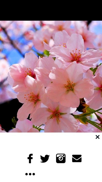 Spring Wallpaper - Nature Wallpapers & Backgrounds screenshot-3