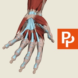 Hand: 3D Real-time Human Anatomy