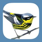 Sibley Birds 2nd Edition