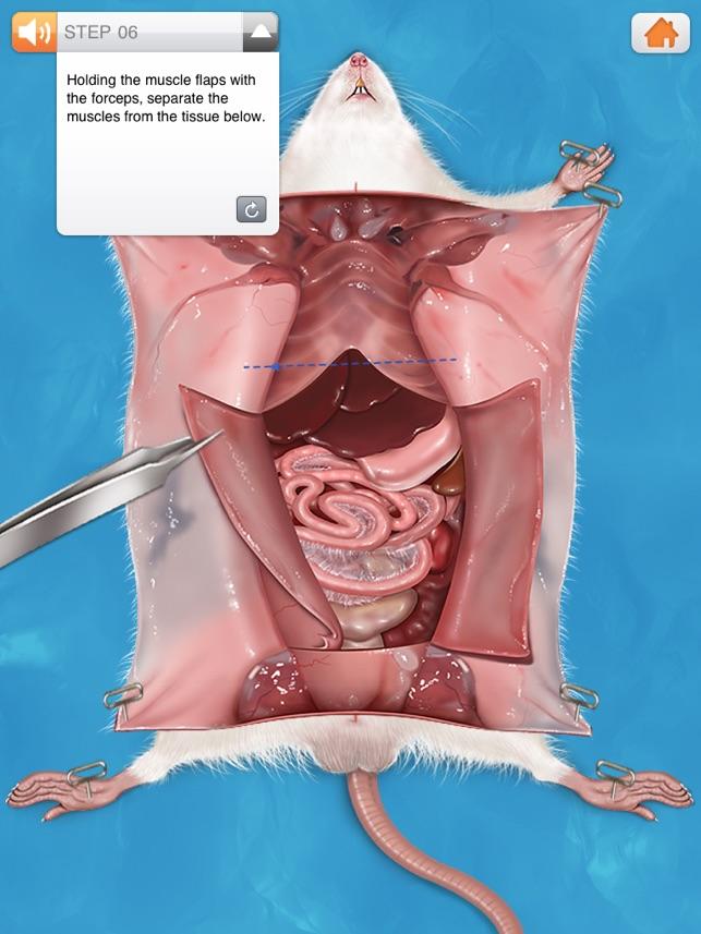 rat dissection - Juve.cenitdelacabrera.co
