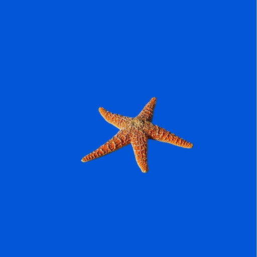 Starfish Sticker Pack