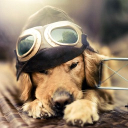 Dog Wallpapers - Cute Puppies Themes For Mobile