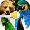 动物的叫声 听力刺激图片