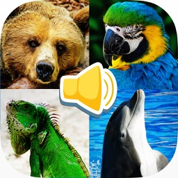 Animal sounds recognize animal