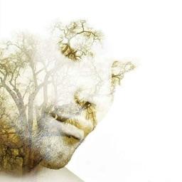Ser Árvore