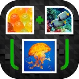 PicPicWord - New 2 Pics 1 Word Puzzle