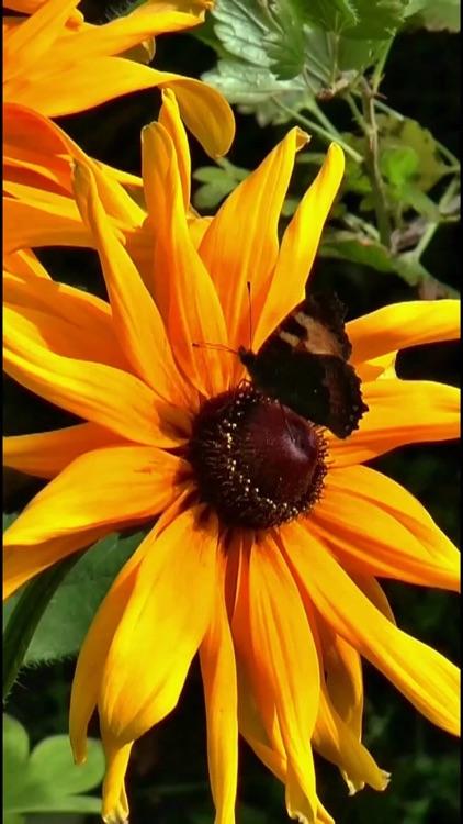 Butterfly Live Wallpaper Lite screenshot-3