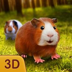 Activities of Guinea Pig In Forest