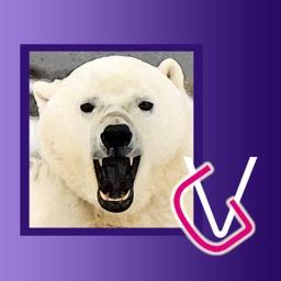 Album Polar Bears HD