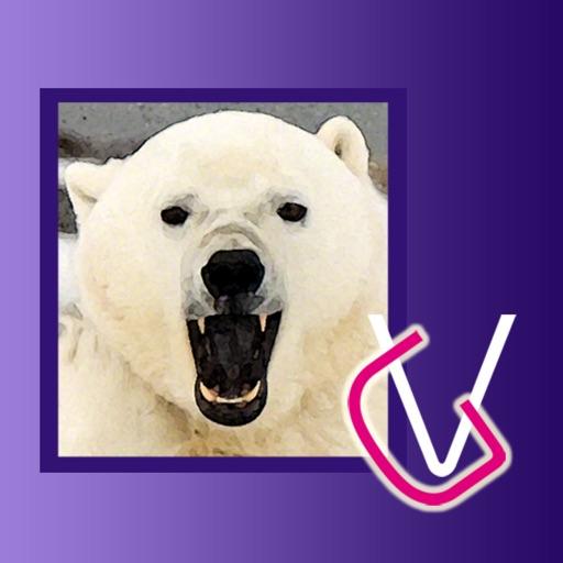 Альбом Белые Медведи HD