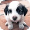 模拟宠物养成 - 宠物游戏之照顾小狗狗 - iPhoneアプリ