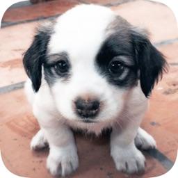 模拟宠物养成 - 宠物游戏之照顾小狗狗