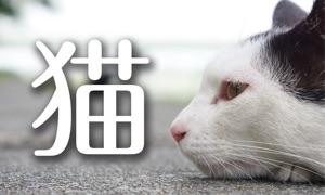12 months of Street Cats