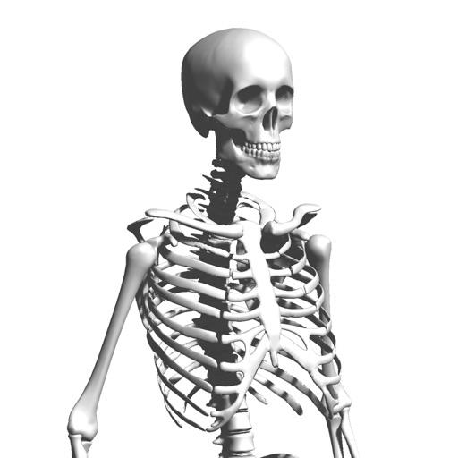 Skeleton Party